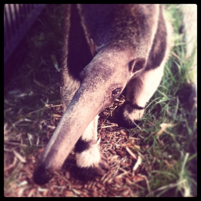 She's an anteater, make you work hard, make you spend hard, make you want all, of her love…