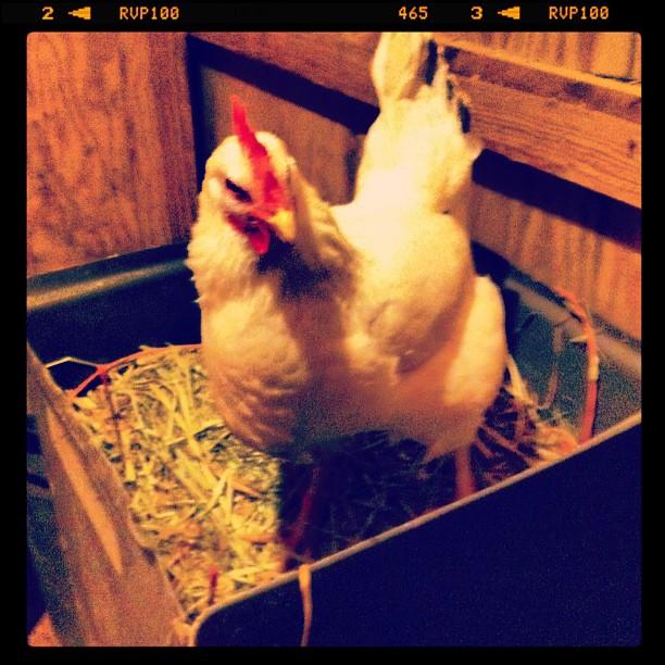 Egg laying prep!
