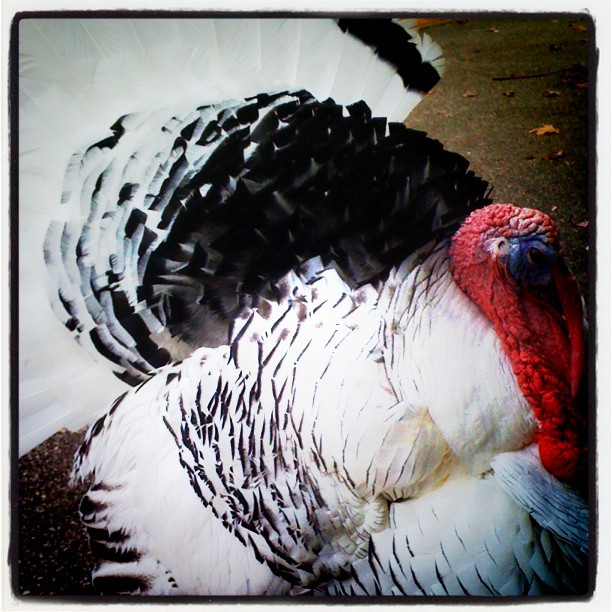 Winkle is thankful to live at the Zoo today! Happy Thanksgiving!