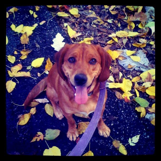 Happy fall from Hannah!