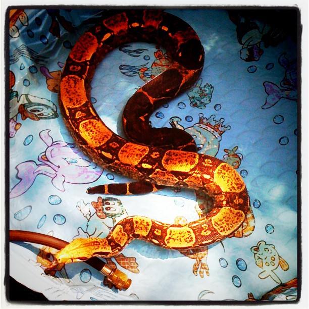 Summer snake fun (Taken with  Instagram )