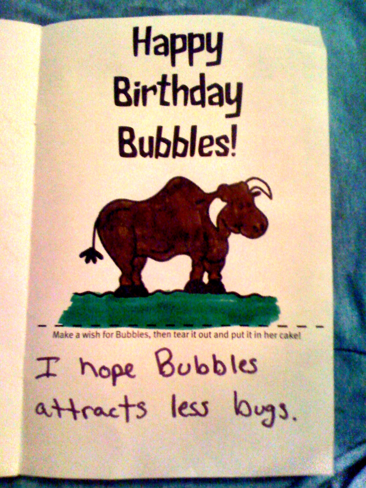 """And now a selection of some of the best of Bubbles' birthday wishes…   Let's start out with this one. """"I hope Bubbles attracts less bugs.""""   Who wouldn't want to attract less bugs for her birthday?"""
