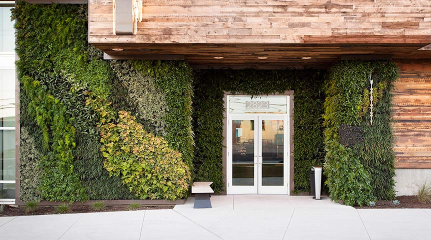 exterior irrigated living wall, Austin, TX  |  2016  |   Photo by Ryann Ford
