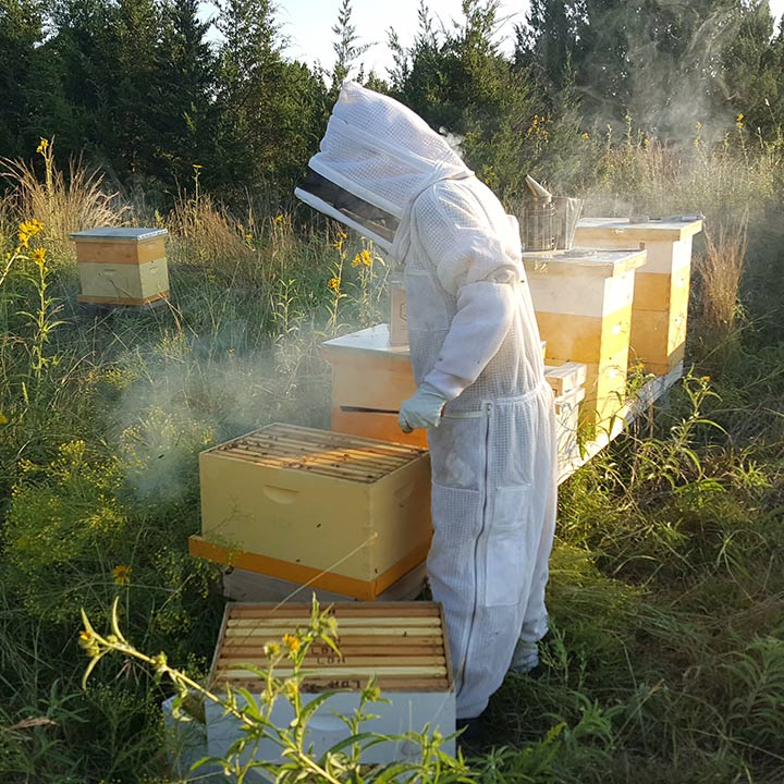 TXBW-Erika_WorkingBees-sq-web.jpg