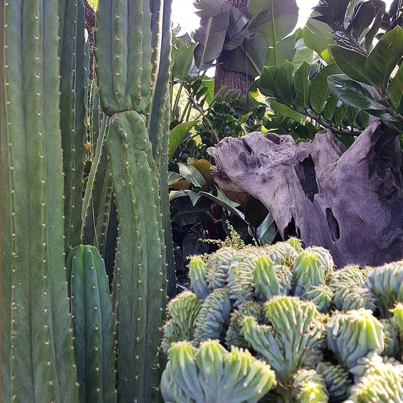 plant-textures-sq-web.jpg