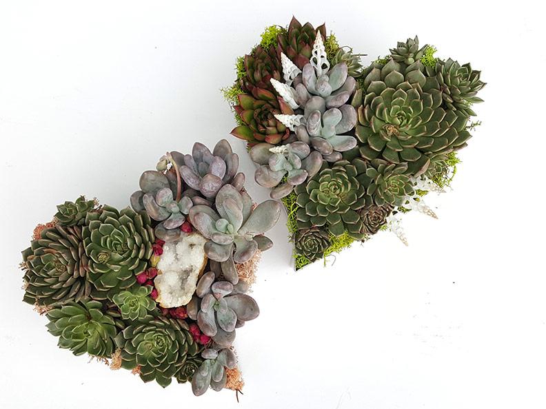 heart-succulent-walls-web.jpg