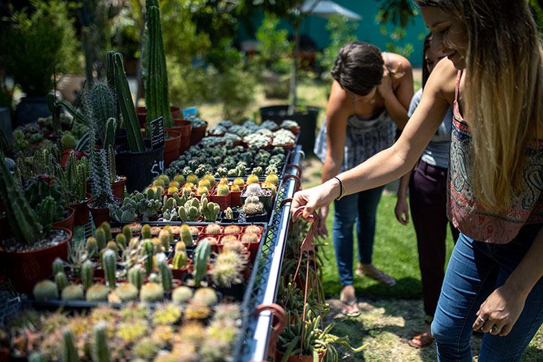 cactus-shopping-web.jpg