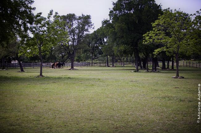 5046-pasture.jpg