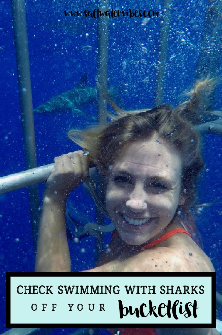 Shark Cage Diving Hawaii + SaltWaterVibes