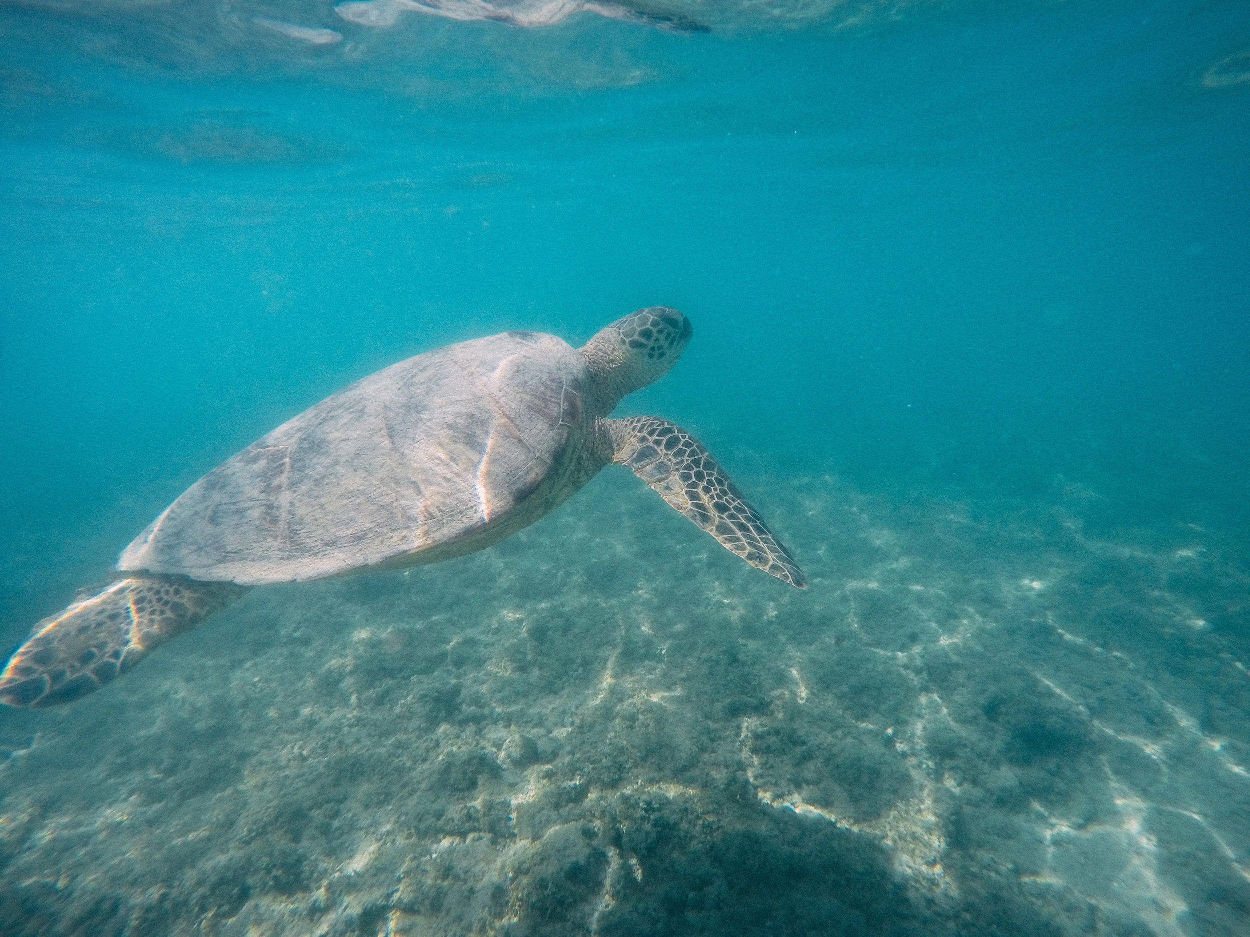 Where to Swim With Turtles on Oahu + SaltWaterVibes