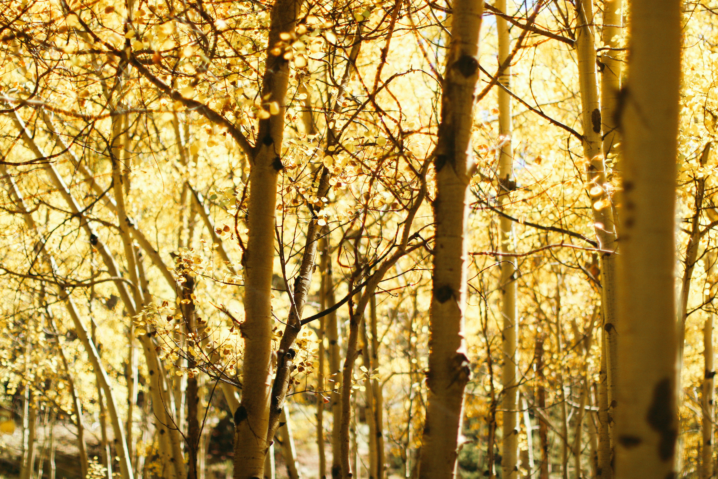 Where to See Golden Aspens in Colorado + SaltWaterVibes