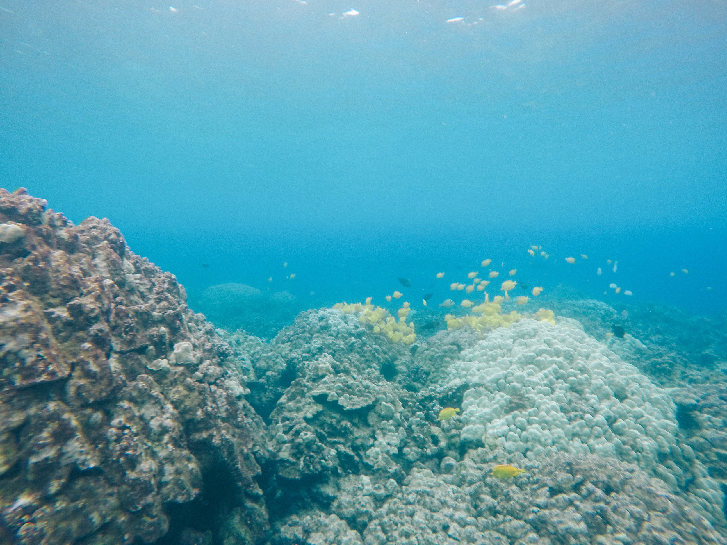 Knowing: Coral Reefs + SaltWaterVibes