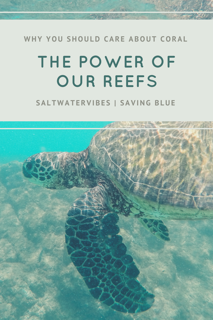 Caring: Coral Reefs + SaltWaterVibes