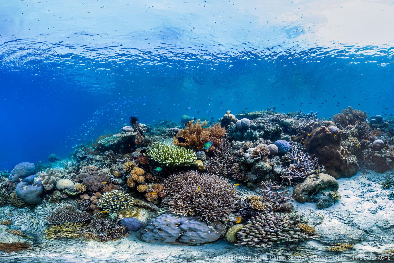 Image Source The Ocean Agency / XL Catlin Seaview Survey / Richard Vevers