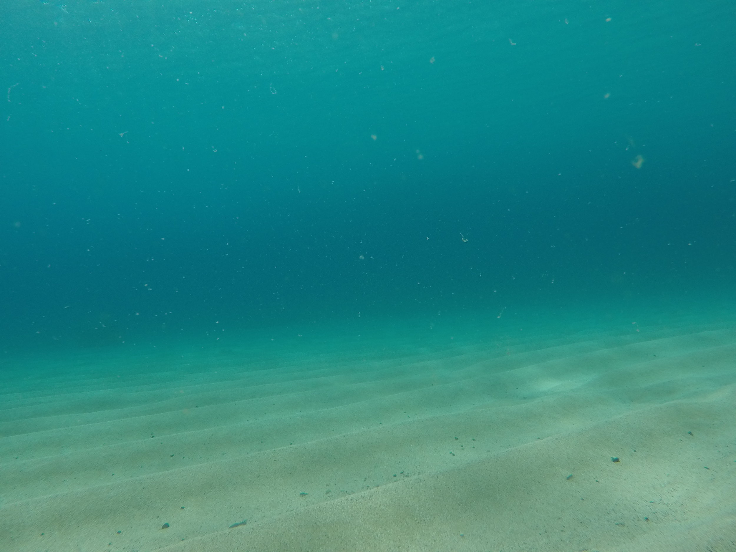 Lets Talk About Climate Change | SaltWaterVibes + Saving Blue