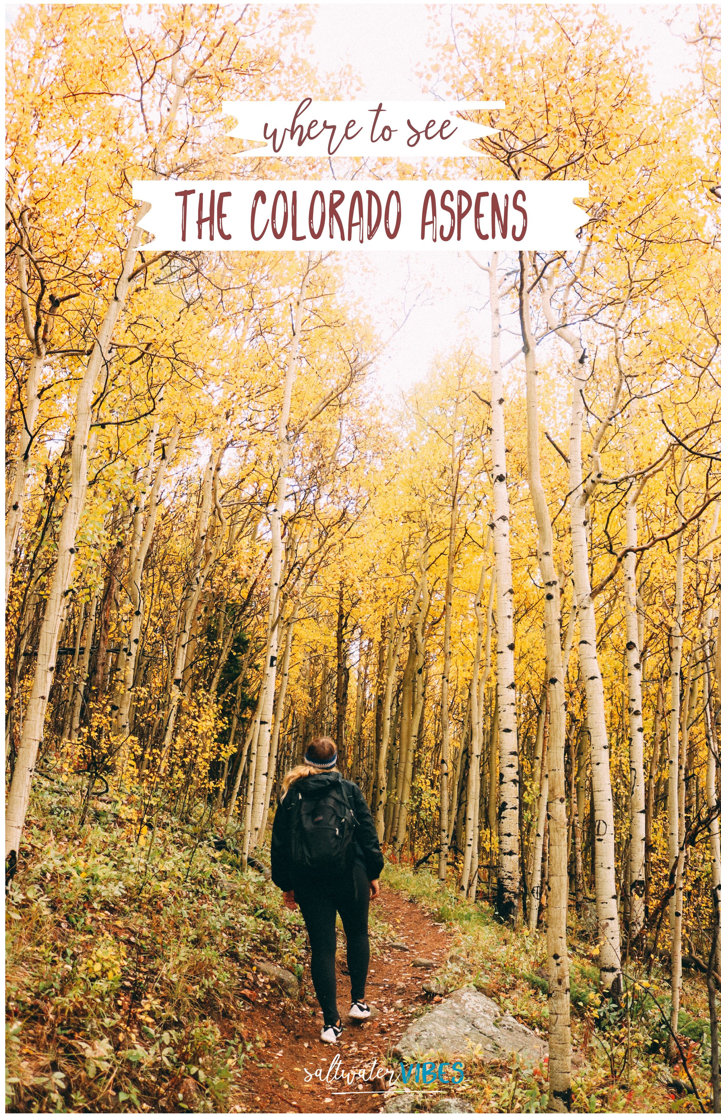 Where To See Golden Aspens In Colorado | SaltWaterVibes