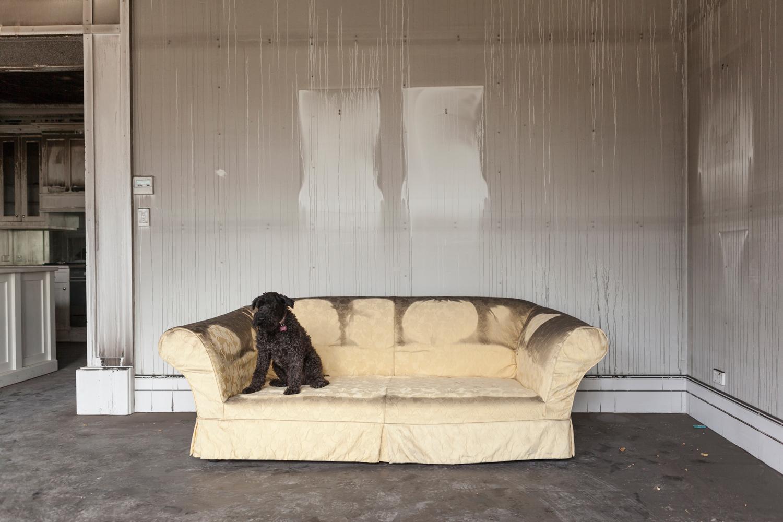 bri-hammond-the-hall-house-fire-dog.jpg