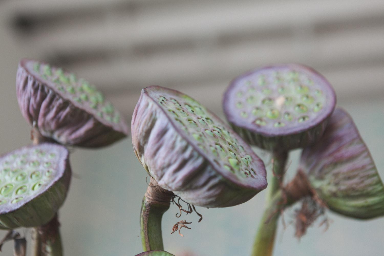 babylon-flowers-brunswick-florist-5.jpg