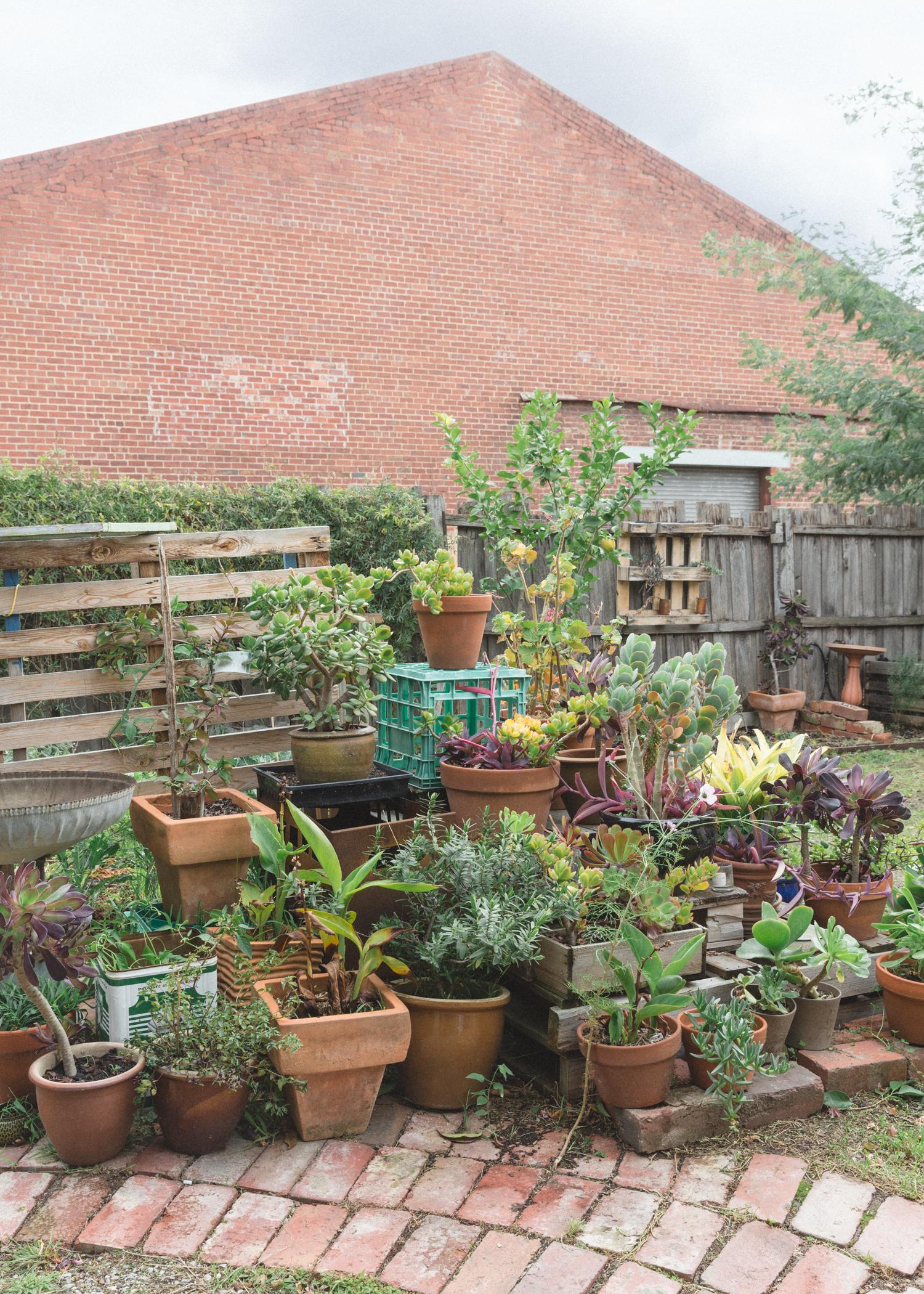 garden backyard succulent collection