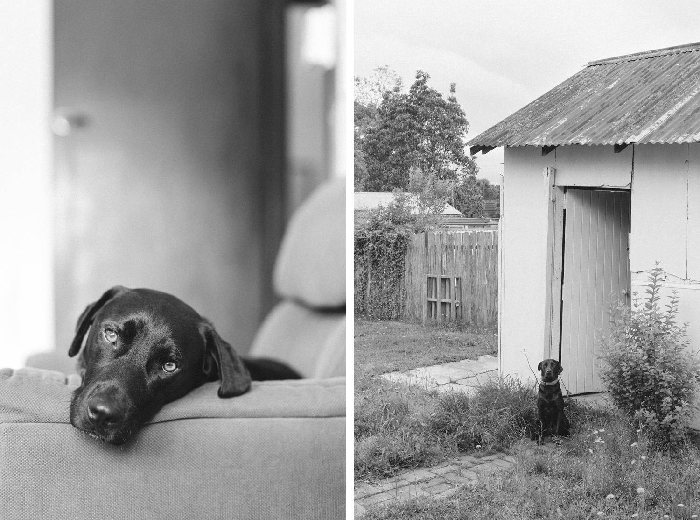 dog-portraits-at-home-bri-hammond-03.jpg