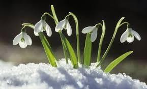 snowdrops.jpg