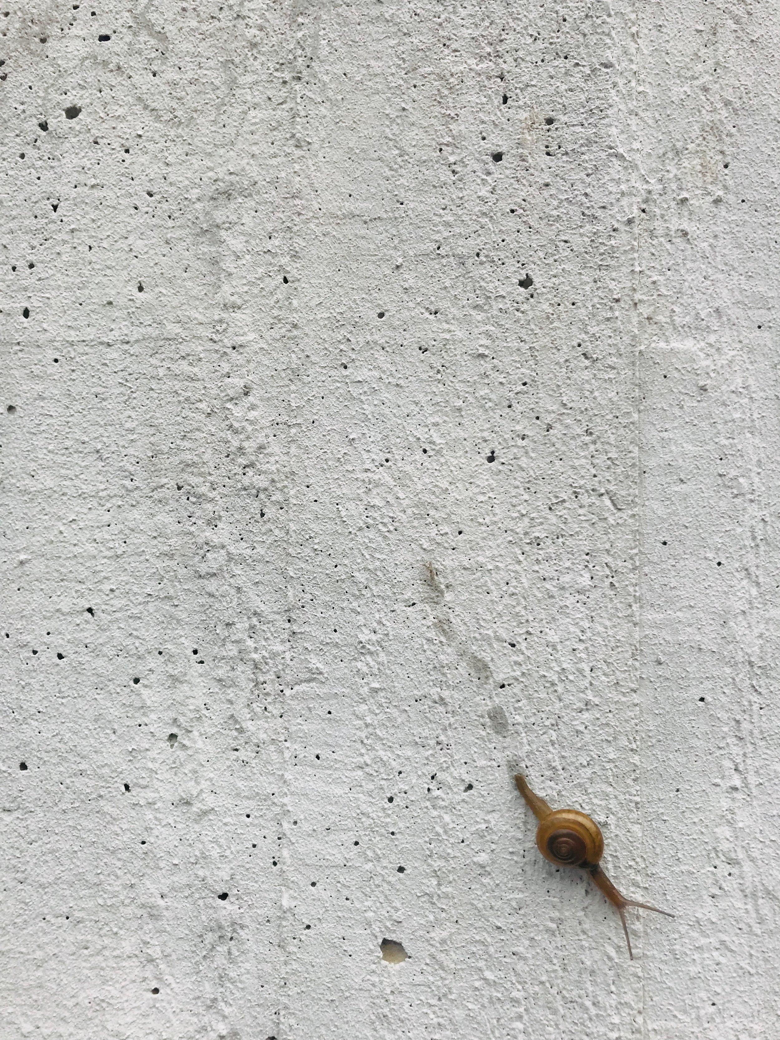 gena-okami-1661660-unsplash.jpg