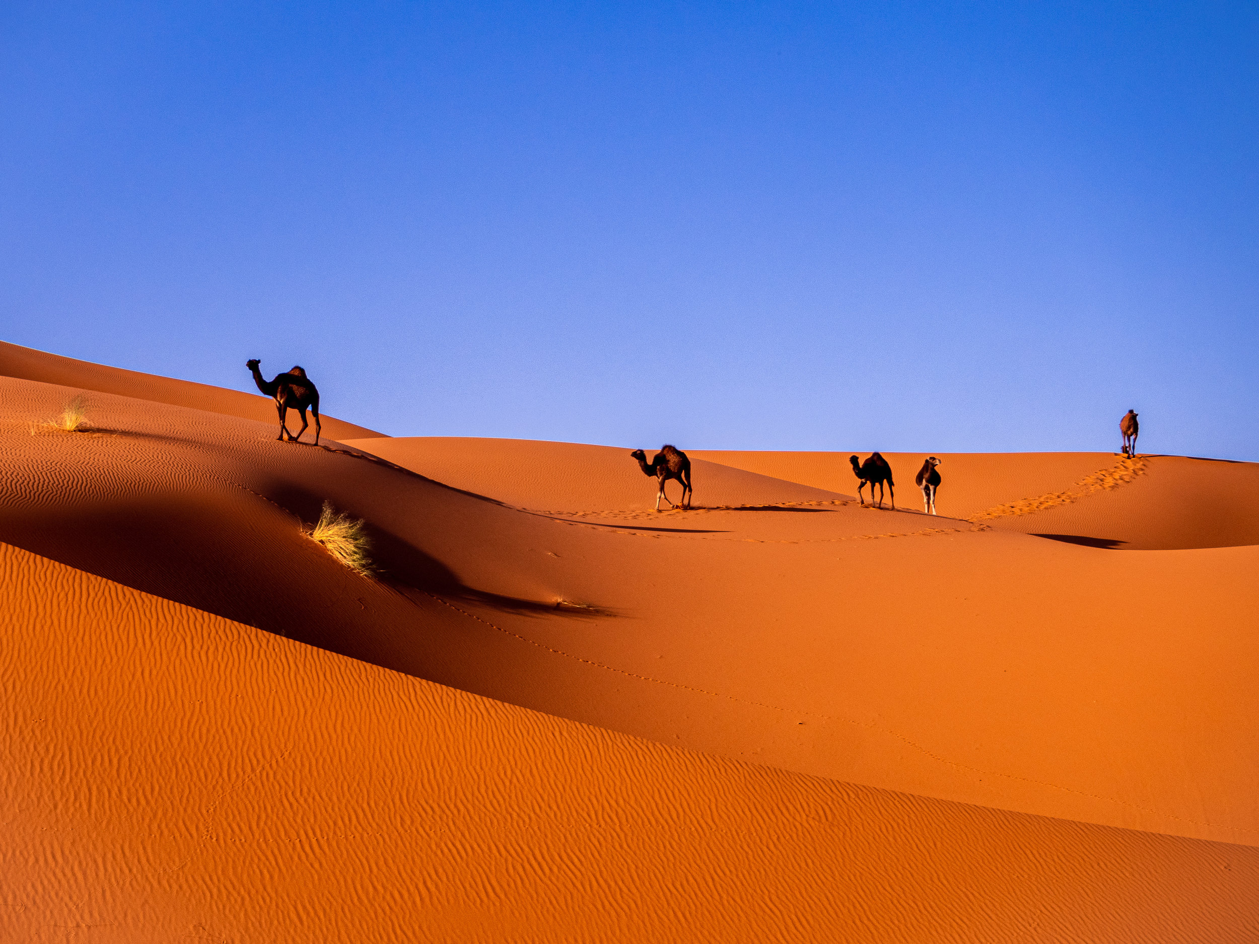 Come to discover the Moroccan desert, - you'll get to experience joyful and fearful dunes rides. You can also enjoy nights in camps seeing the beautiful setting of stars.