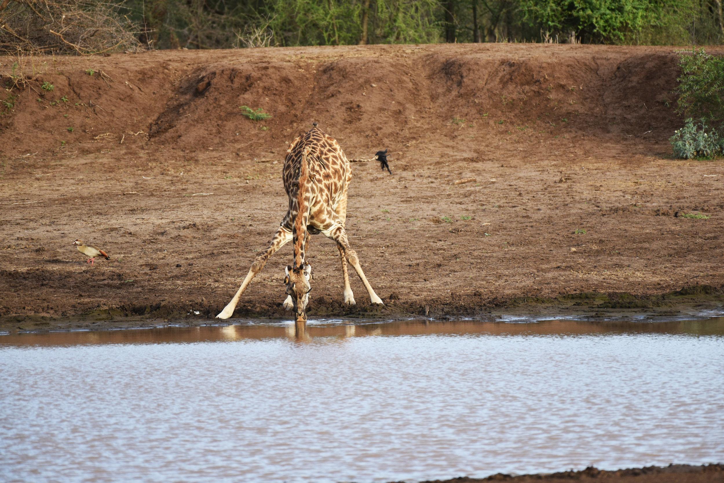 Maasai Safari Camp -