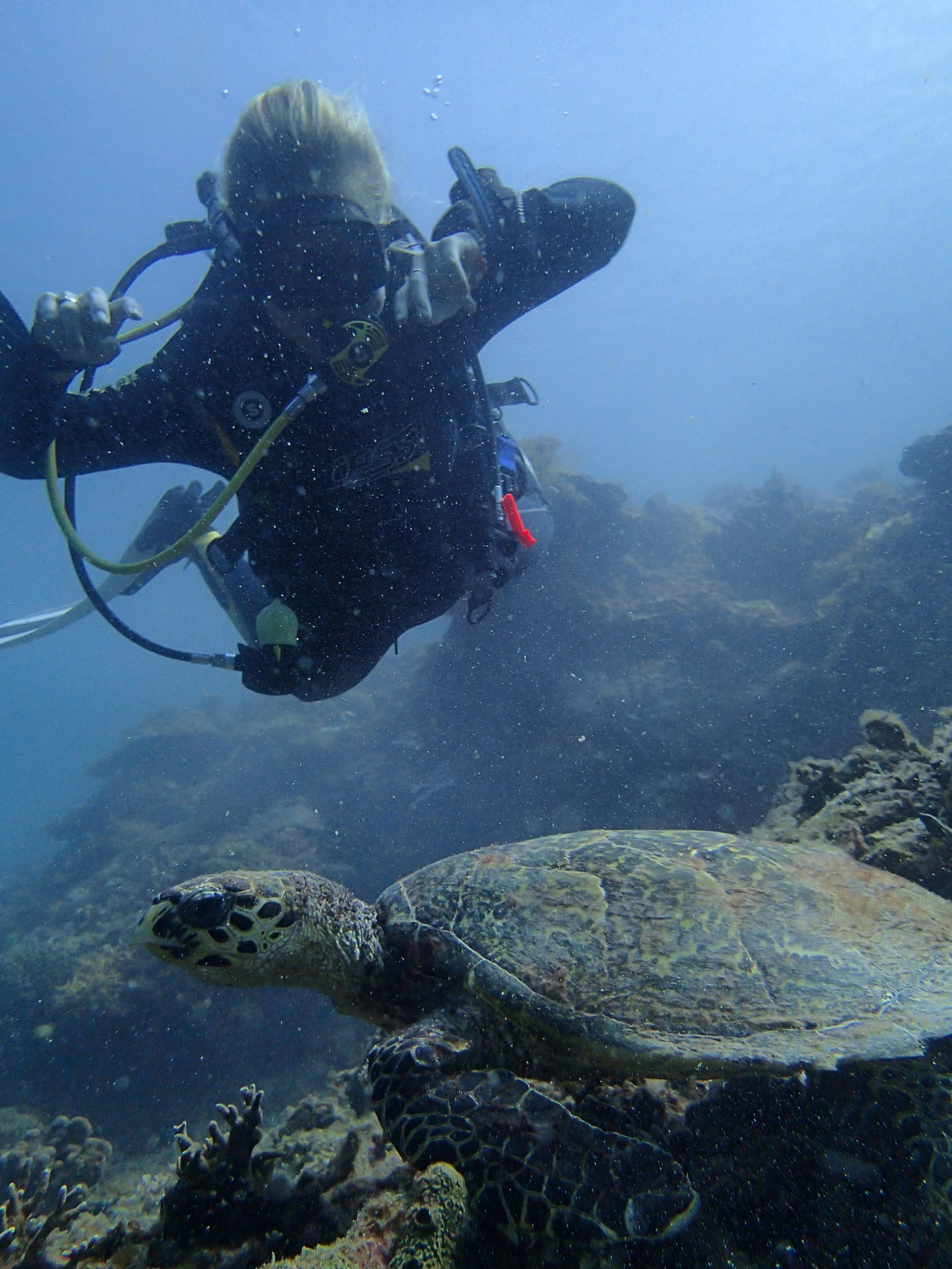 <3 turtles!