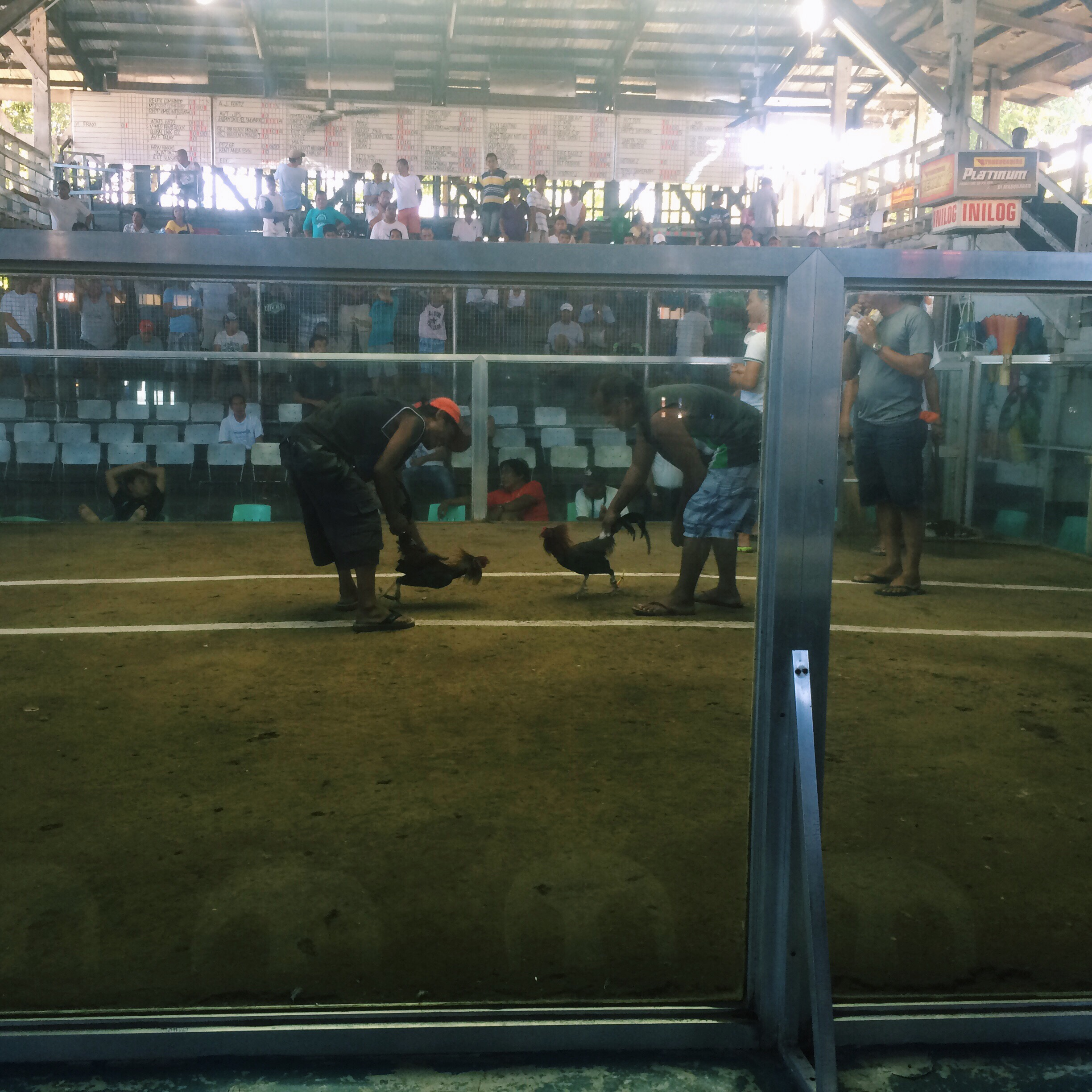 cock fight in Dumaguete!