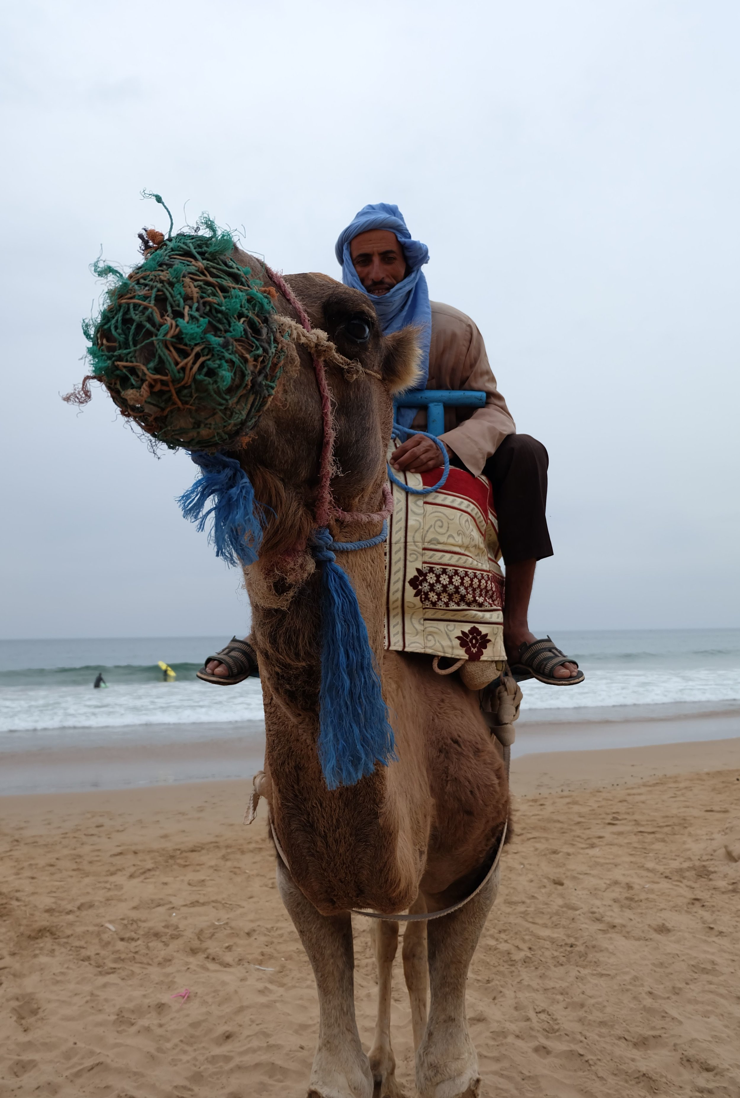 camel-taghazout-morocco-animal-cruelty