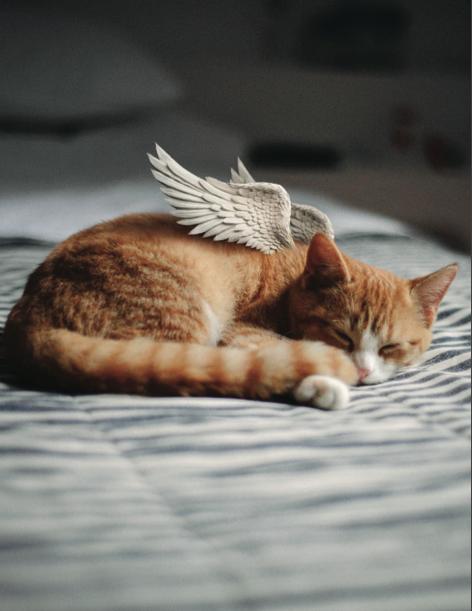 Cat Symp Card V1.png