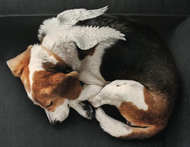 Sympathy Card Dog 4x6.png