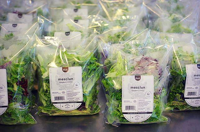 Vous pouvez maintenant retrouver notre mélange de laitues Mesclun dans son nouvel emballage 100% compostable dans plusieurs épiceries!! Voici la liste:  Sherbrooke: Le Silo Épicerie Bio-Vrac La Coop d'Alentour La Grande Ruche  Avril  Face de bœuf  Magog: Avril  Bromont: L'épicerie Futée  Montréal: Marché 3 Piliers Bio-terre - Épicerie Santé Épicerie Les Récoltes  Design de l'étiquette par nos amis chez @studio.miles 👏