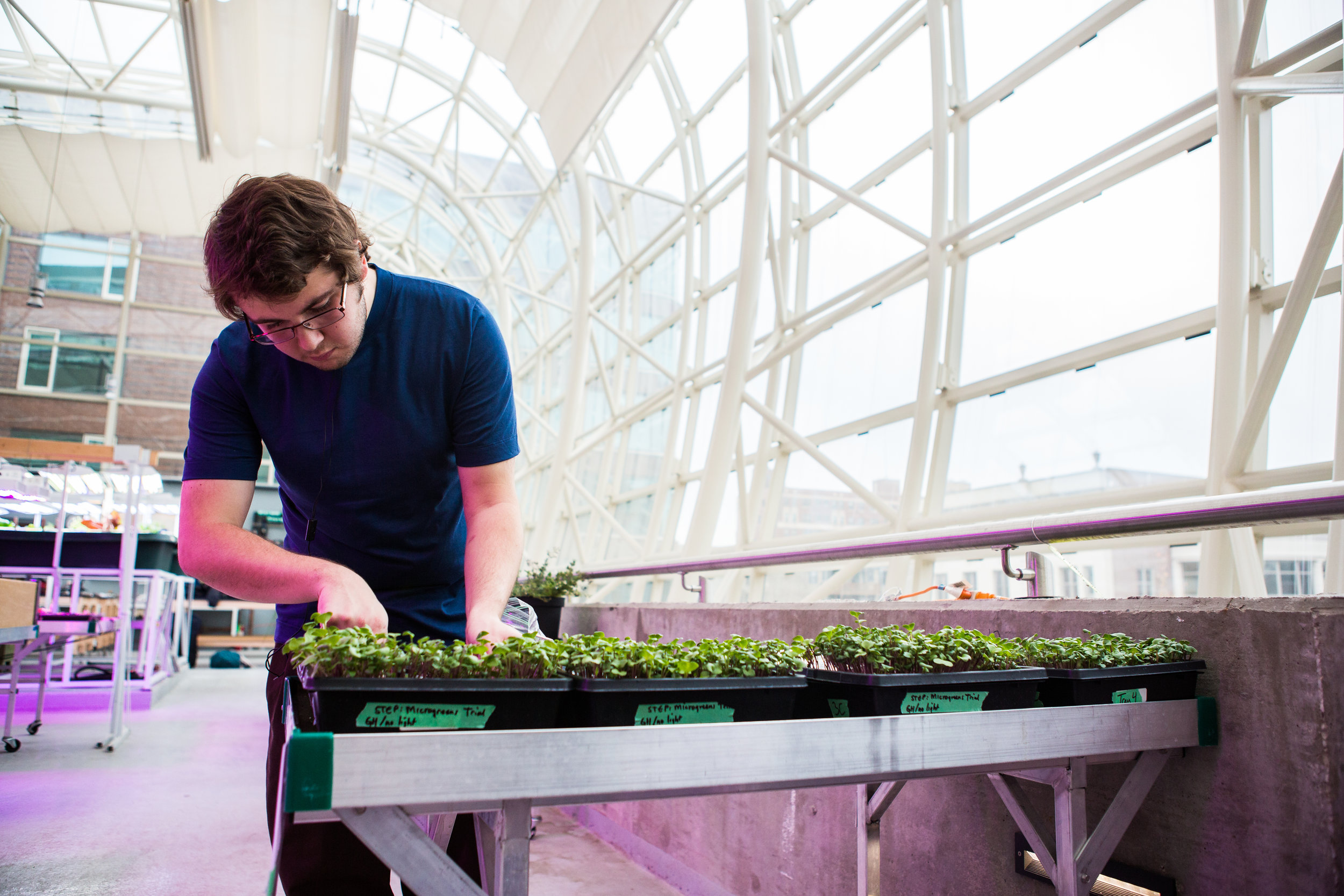 Jon Barber trims microgreens inside the Ecodome as part of his research for a STEP course (Photo by Heather Eidson)
