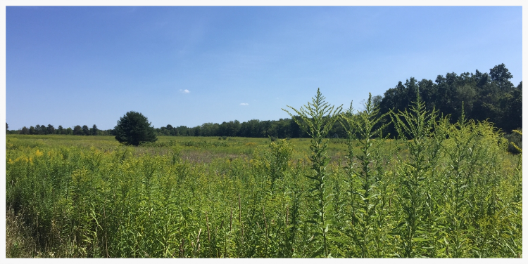 The 41-acre Sherman Road Preserve on the southwest corner of Sherman Road and County Line Road is adjacent to 51 privately owned acres protected by a conservation easement for a total of 92 contiguous acres protected in perpetuity.