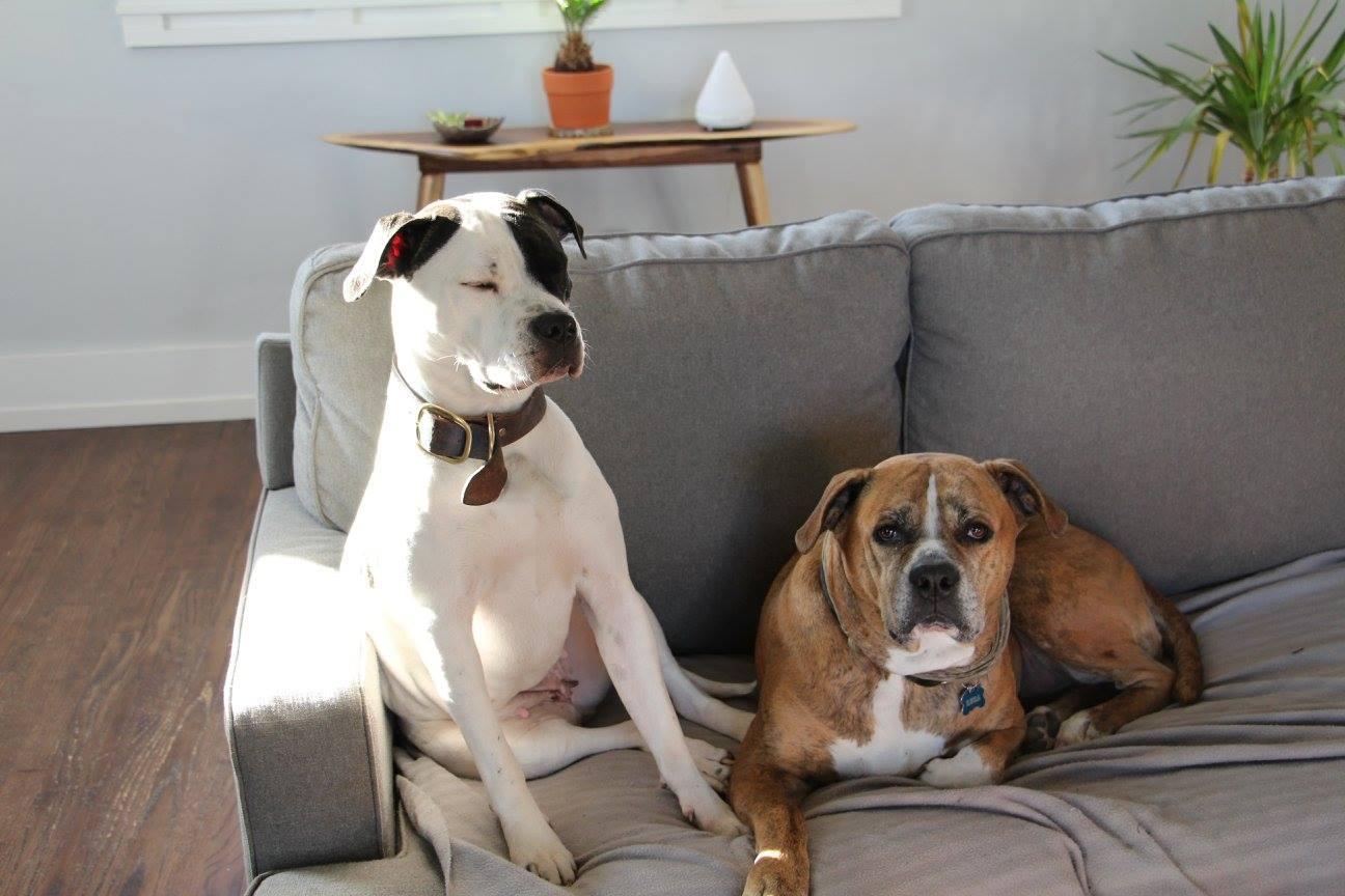 My babies: Roxy (left) & Ruca (right)