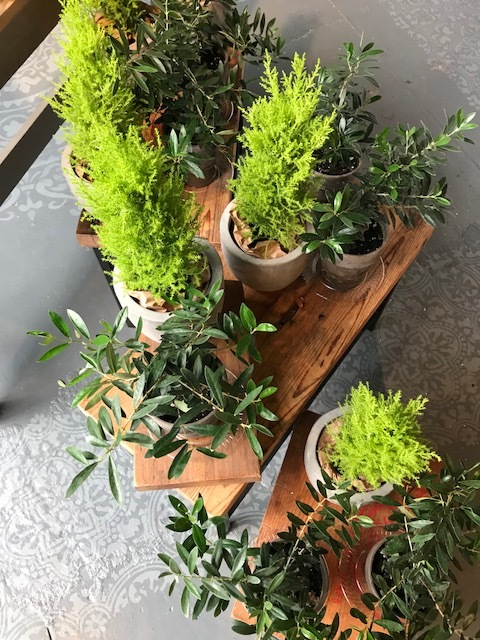 Plants at the City Farmhouse Pop Up Shop