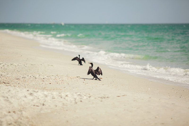 naples backyard beach wedding: beach, birds