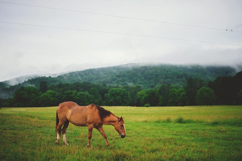 barnsley garden resort wedding: horse