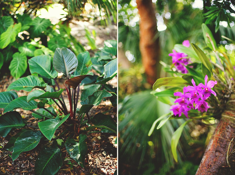 pierre's restaurant wedding: plants scenery