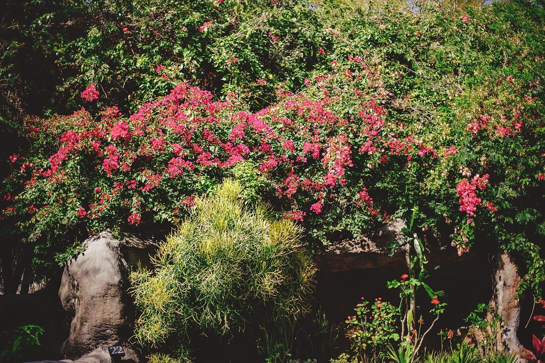 sunken-gardens-romantic-wedding-photos-0035.JPG