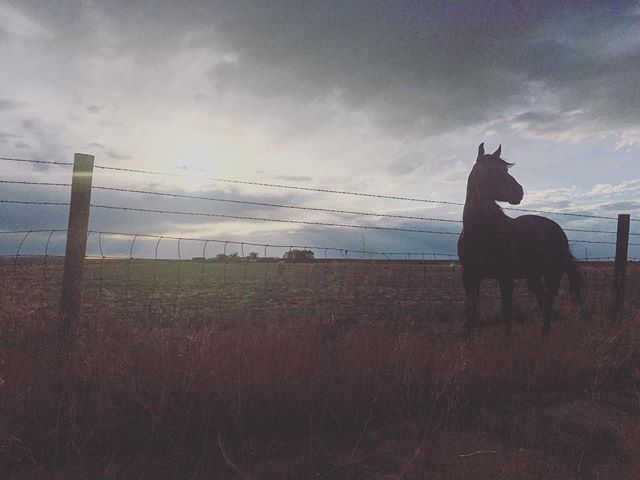 Thinking about a horse in Wyoming. . . . . . . . . . . . #ilovehorses #wyoming #isntshelovely #horselove #wildlife #naturerules #roadsideamerica #equestrianphotography #tbt #adventure #afterthestorm #thursdaythoughts #roadside #lovingness #horsetalk #horse #photography #gratitude #f4f #thankfulthursday #animallove #horsewhisperer #photooftheday #beautiful
