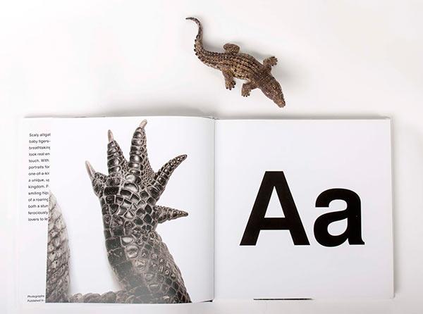 A-is-for-Alligator-72w.jpg