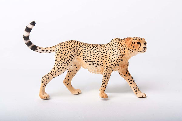 cheetah-72w.jpg