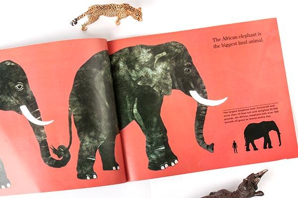 african-elephant-72w.jpg