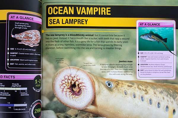 ocean-vampire-web.jpg