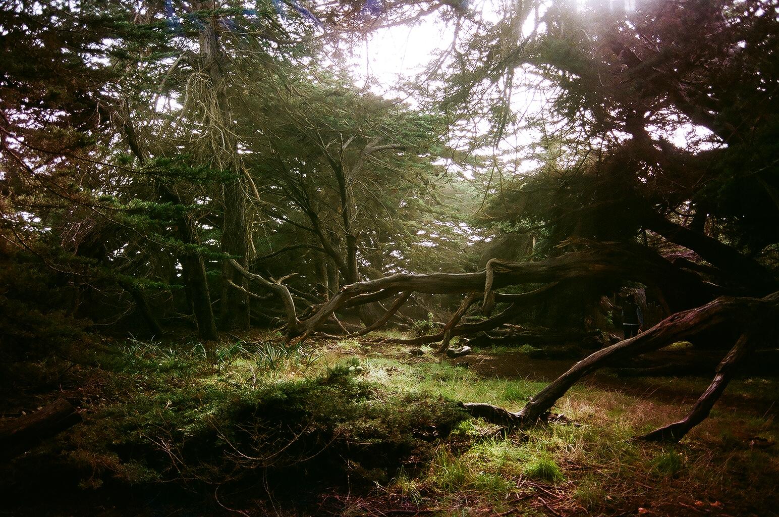 Forest Floor, Gualala CA