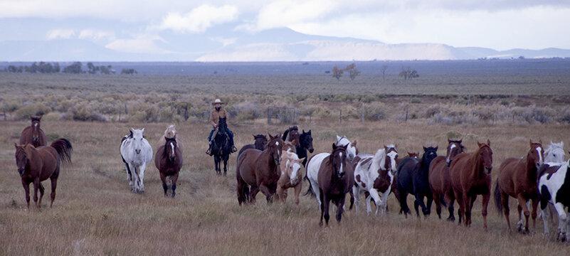 A wrangler bringing the horses in for the Zapata Ranch guests.