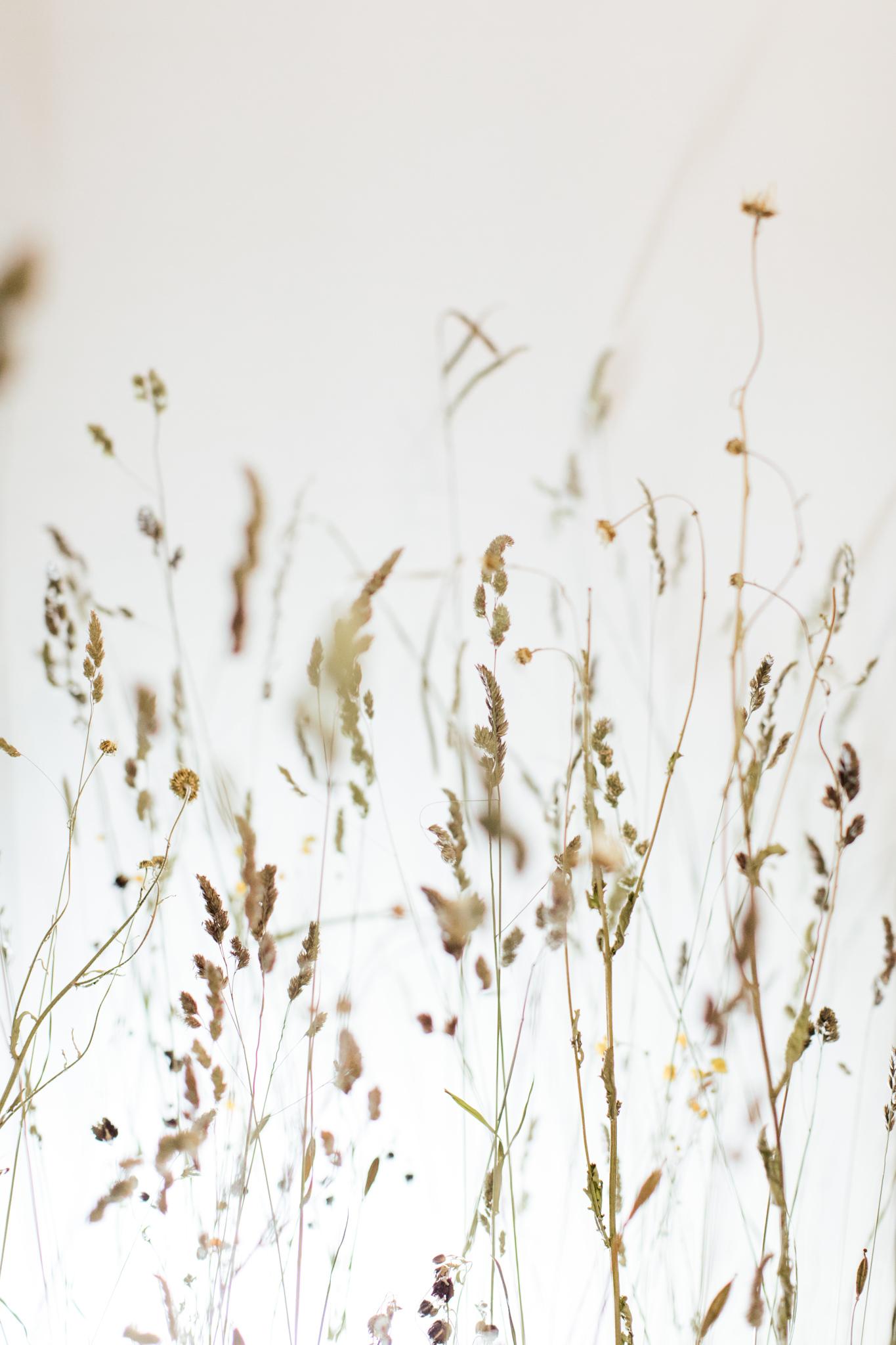 Herbarium_Joanne-Crawford-6680.JPG